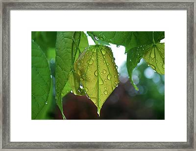 #pluviophile Framed Print by Becky Furgason