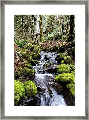 Pnw Forest Framed Print