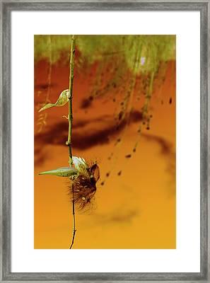 Pod Cast Framed Print