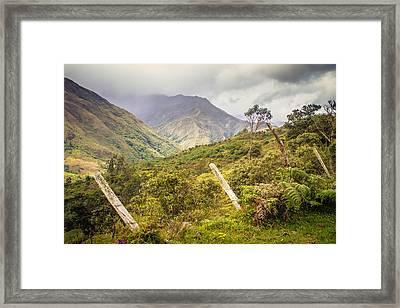 Podocarpus National Park Framed Print