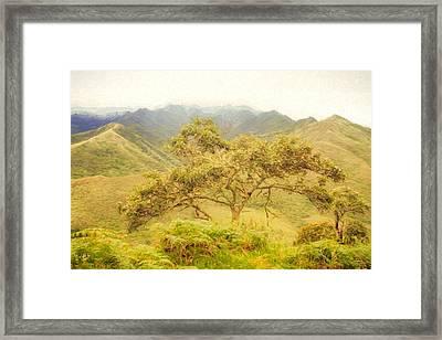 Podocarpus Tree Framed Print