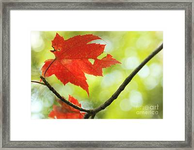 Framed Print featuring the photograph Poesie D'automne  by Aimelle