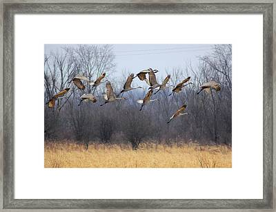 Framed Print featuring the photograph Poetry In Motion by Viviana  Nadowski
