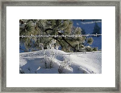 Pogonip In The Air Framed Print by Donna Kennedy