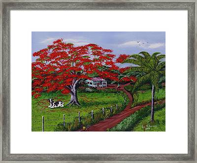 Poinciana Blvd Framed Print