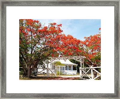Poinciana Cottage Framed Print by Amar Sheow