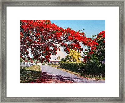 Poinciana Shadows Framed Print