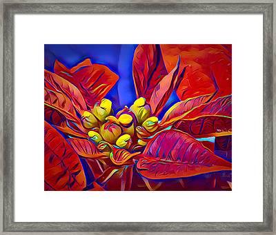 Poinsettia Closeup Framed Print