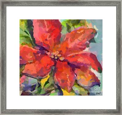 Poinsettia Framed Print