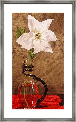 Poinsettia In Pitcher  Framed Print