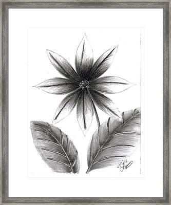 Poinsettia Framed Print by Lynnette Jones