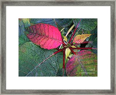 Poinsettia Watercolor Framed Print