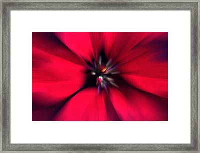 Poinsettia Zoom Framed Print by Steve Ohlsen