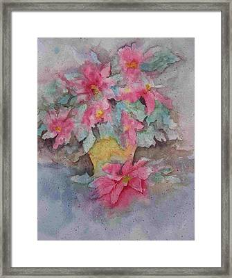 Poinsettias II Framed Print by Sandy Collier