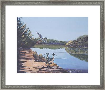 Point Clare Reflections 1 Framed Print by Murray McLeod