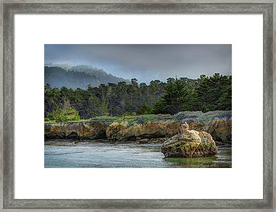 Point Lobos, Calif. Whaler's Cove Framed Print by Wendy Seagren