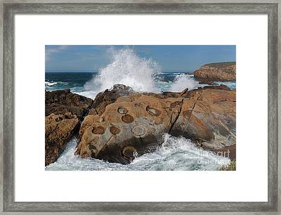Point Lobos' Concretions Framed Print