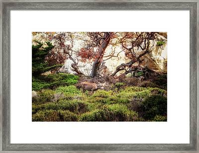 Point Lobos - Eden Framed Print