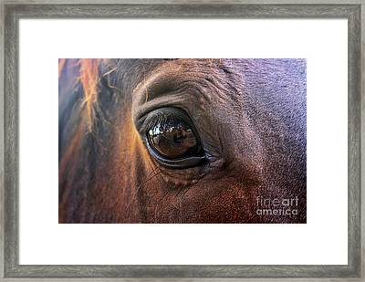 Framed Print featuring the photograph Point Of View by Stephen Mitchell