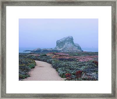 Point Piedras Blancas Framed Print