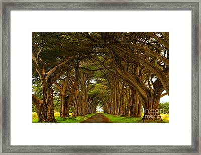 Point Reyes Cypress Tunnel Framed Print by Adam Jewell