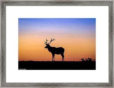 Point Reyes Elk Framed Print