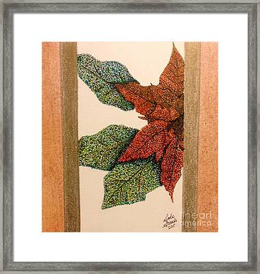 Point-settia Framed Print by Dale Arends
