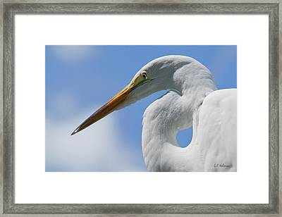 Pointed Curves Framed Print by Christopher Holmes