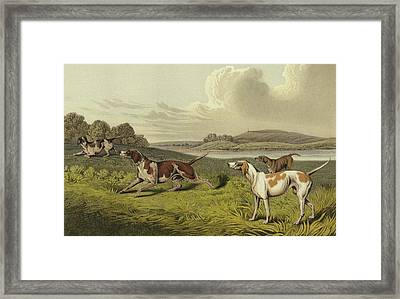 Pointers Framed Print by Henry Thomas Alken