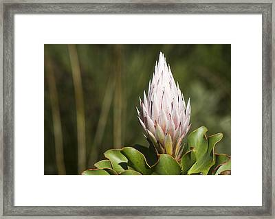 Framed Print featuring the photograph Pointing Up by Nathan Rupert