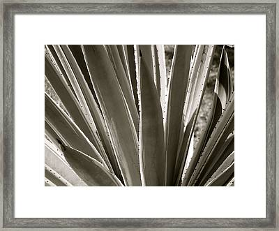 Pointy Plant Framed Print by Santiago Rodriguez