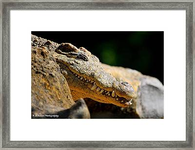 Framed Print featuring the photograph Pointy Teeth by Barbara Bowen