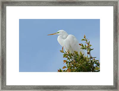 Framed Print featuring the photograph Poised 2 by Fraida Gutovich