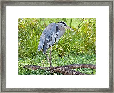 Poised And Focused Framed Print