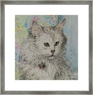 Poised Cat Framed Print