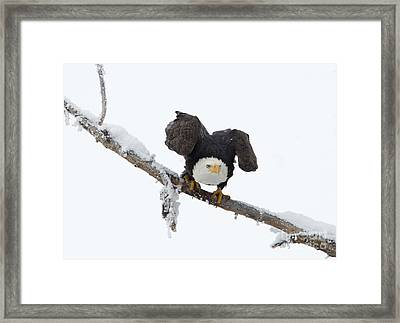 Poised Framed Print by Mike Dawson