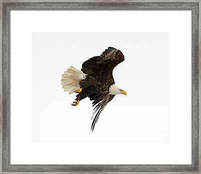 Poised To Strike Framed Print by Mike Dawson