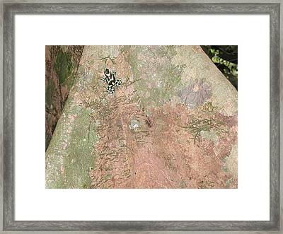 Poison Dart Frog Framed Print by Gregory Young