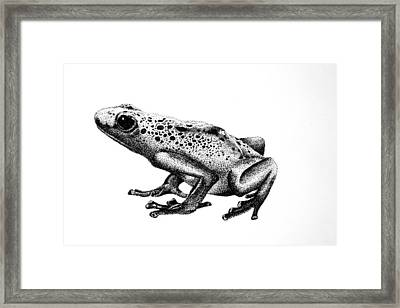 Framed Print featuring the drawing Poison Dart Frog by Rita Silva