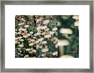 Poisoning Inedible Mushrooms In Retro Style Framed Print by Michal Boubin