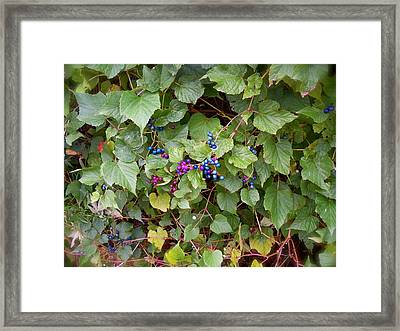 Poisonous Snozzberries Framed Print by Jacqueline Cappadora