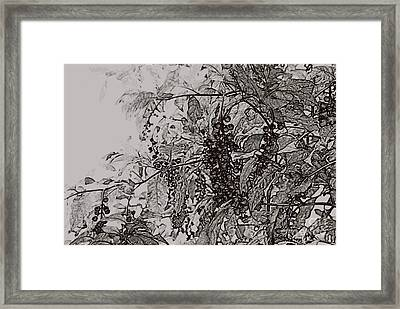 Pokeweed Framed Print