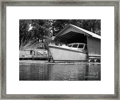 Poking Out Framed Print by Jack Norton