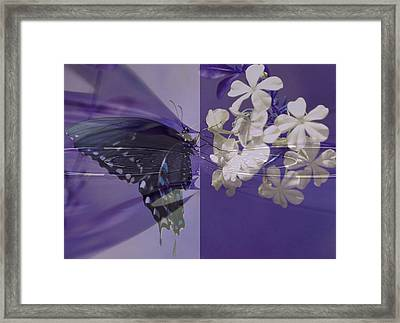 Polar Attraction Framed Print by Rose  Hill