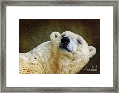 Polar Bear Framed Print by Angela Doelling AD DESIGN Photo and PhotoArt