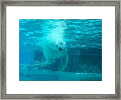 Polar Bear Coming At You Framed Print by Brianna Thompson