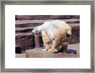 Polar Bear Framed Print by Crystal Webb