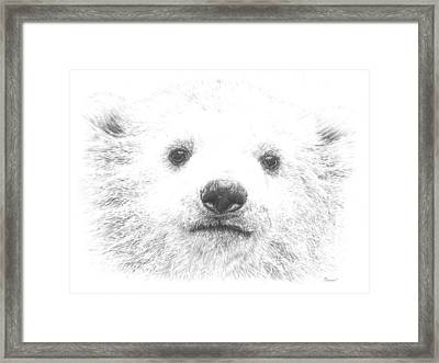 Polar Bear Cub Framed Print