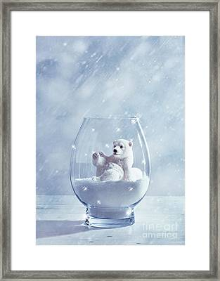 Polar Bear In Snow Globe Framed Print by Amanda Elwell