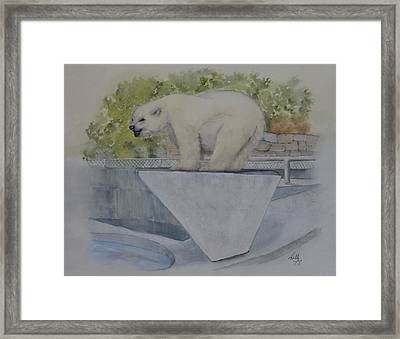 Polar Bear In Vancouver Stanley Park Zoo Vancouver, Bc Framed Print by Kelly Mills